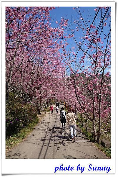 中巴陵櫻木花道9.jpg