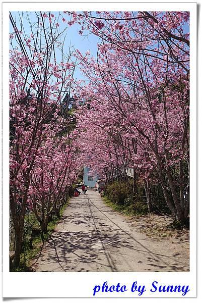 中巴陵櫻木花道11.jpg