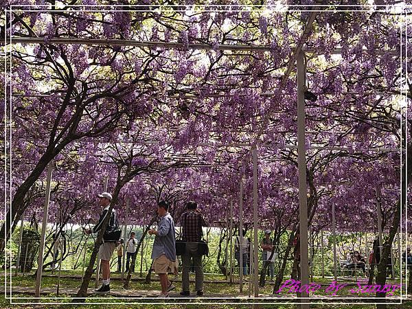 紫藤園屯山園區3.jpg