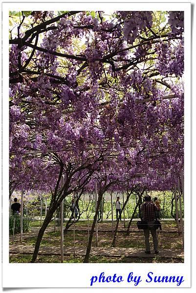 紫藤園屯山園區33.jpg