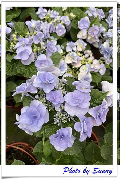中興花卉農場1.jpg