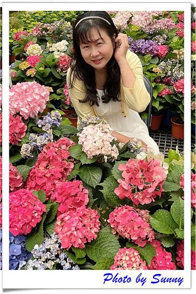 中興花卉農場4.jpg