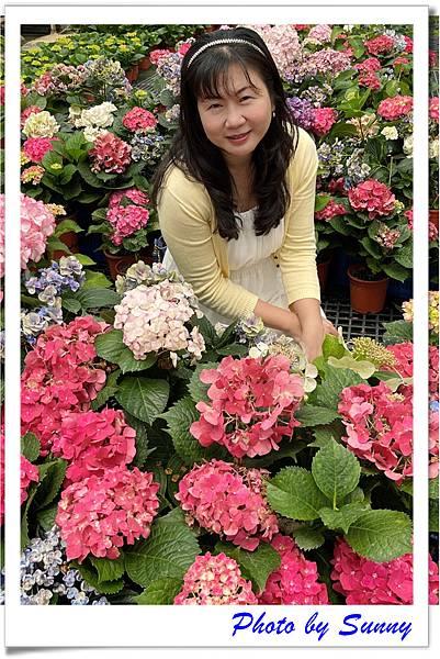 中興花卉農場3.jpg