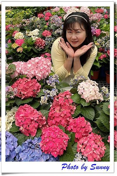 中興花卉農場5.jpg