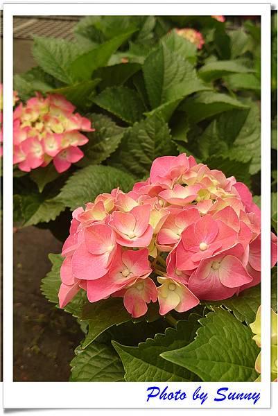中興花卉農場13.jpg