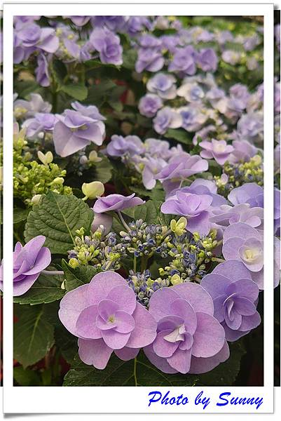 中興花卉農場12.jpg