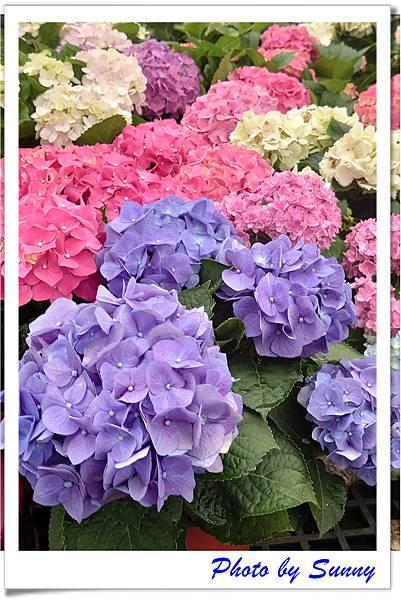 中興花卉農場15.jpg