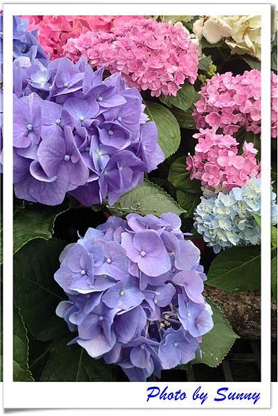 中興花卉農場16.jpg