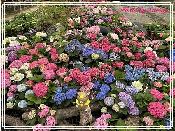 中興花卉農場21.jpg