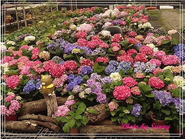 中興花卉農場22.jpg