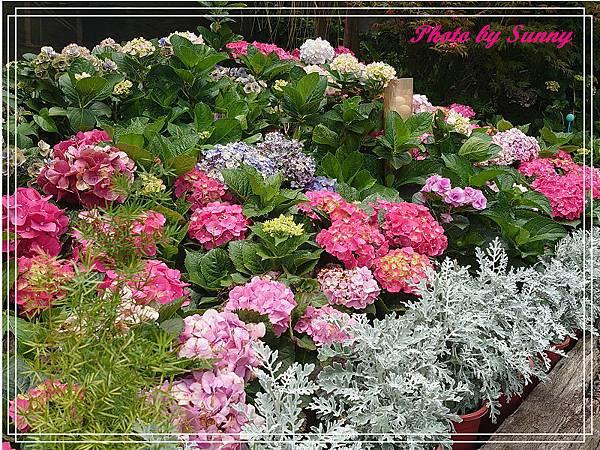 中興花卉農場23.jpg