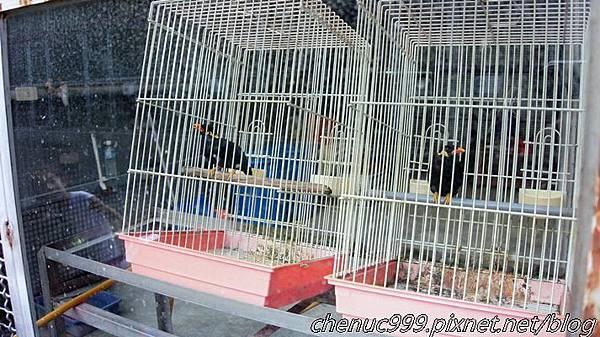 鳳凰谷鳥園