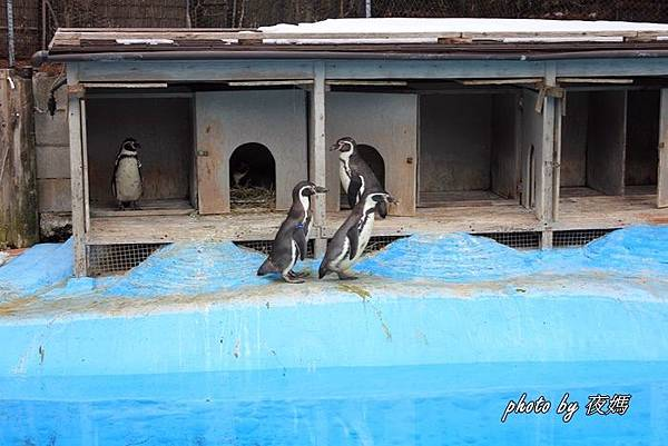 八木山動物園