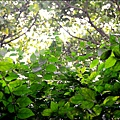20111105-142803.jpg