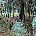 20120127-113018.jpg