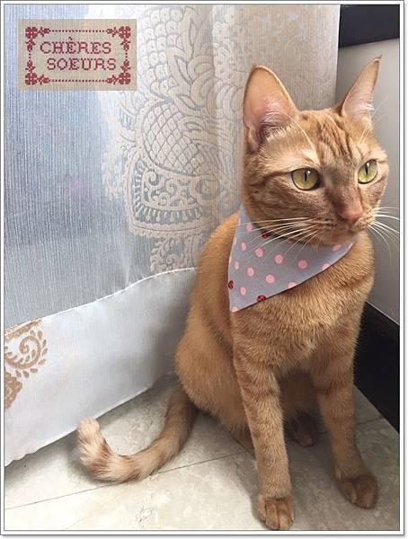 巧手爾思手作貓咪頸圈CAT01G.jpg