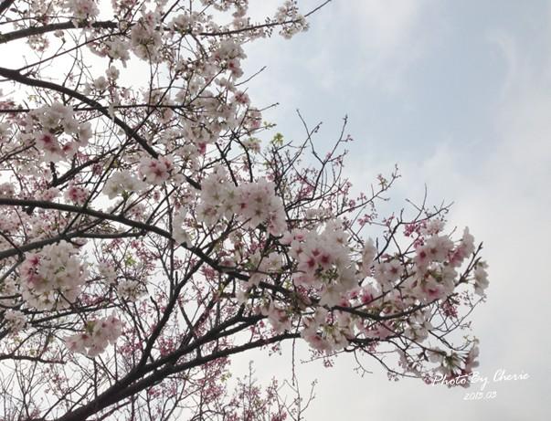 2013陽明山花季001