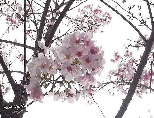 2013陽明山花季014