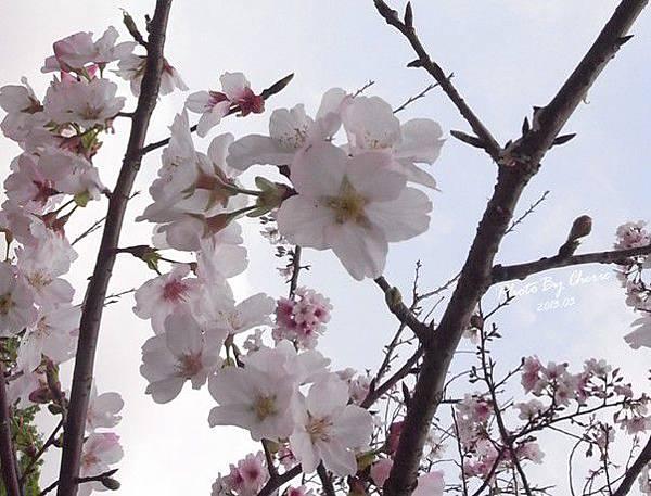 2013陽明山花季021