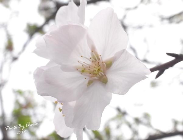 2013陽明山花季022