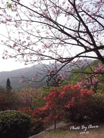 2013陽明山花季025
