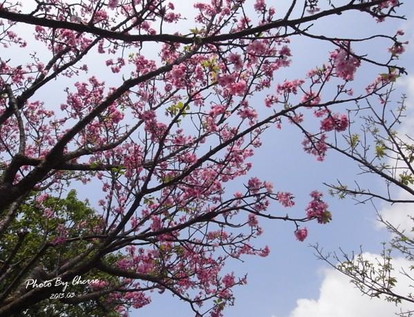 2013陽明山花季026