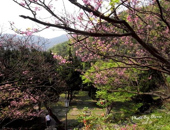 2013陽明山花季027