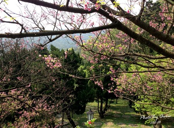 2013陽明山花季029