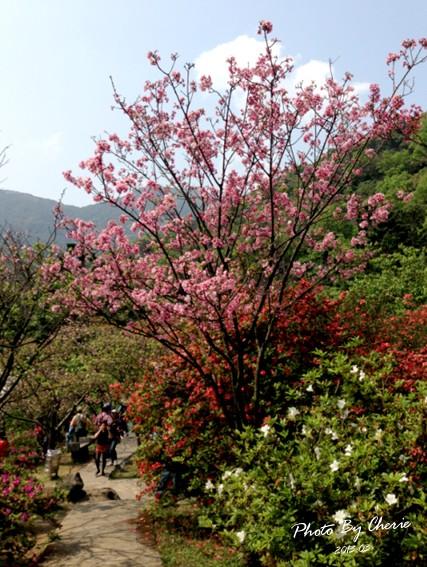 2013陽明山花季033