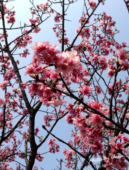 2013陽明山花季035