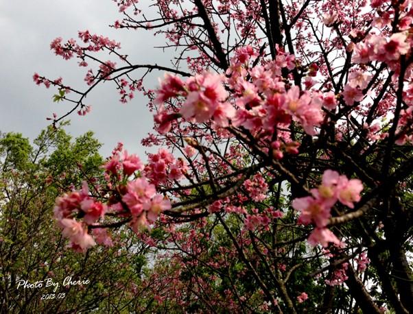 2013陽明山花季036