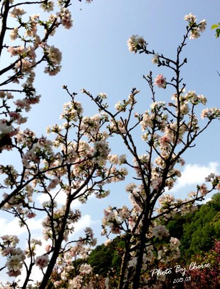 2013陽明山花季038