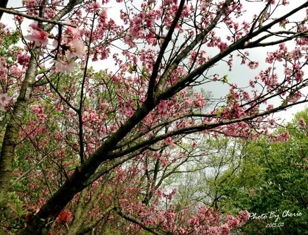 2013陽明山花季040