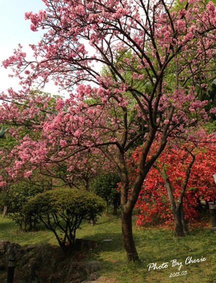 2013陽明山花季044