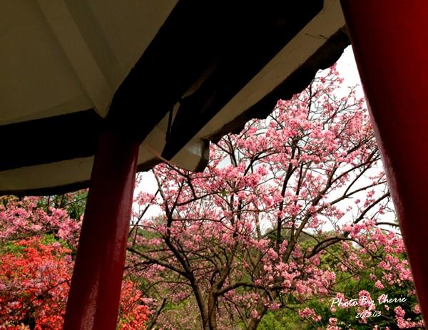 2013陽明山花季045
