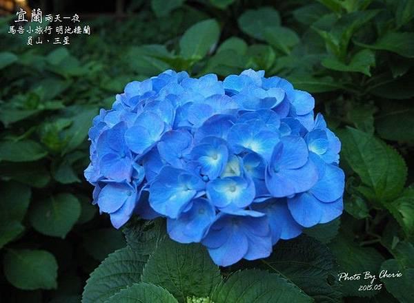 2015052930馬告小旅行020.jpg