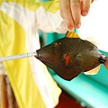 20090806_菲律賓長灘島5日 057.jpg