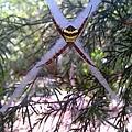 X-spider.jpg