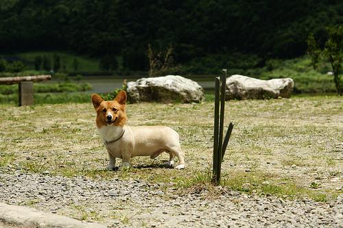 K.在豔陽下跑得開心的胖弟