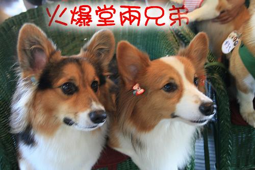 4.火爆堂.jpg