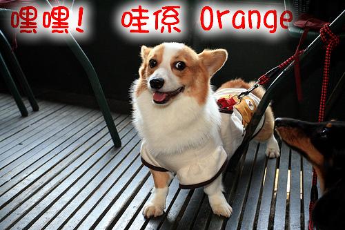 7.orange.jpg