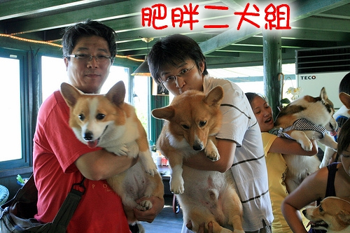 d-3.不合作的肥胖二犬組.jpg