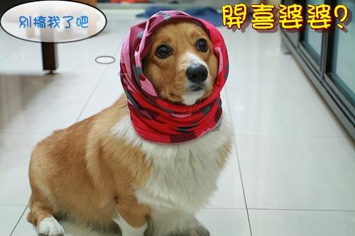 1.開喜婆婆.jpg