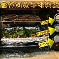 4.牛排青椒一起送入烤箱.jpg