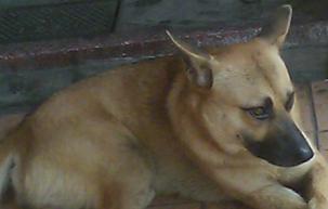 dog02.PNG