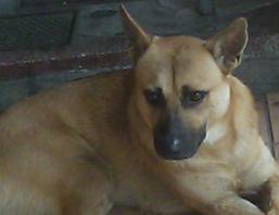 dog03.PNG