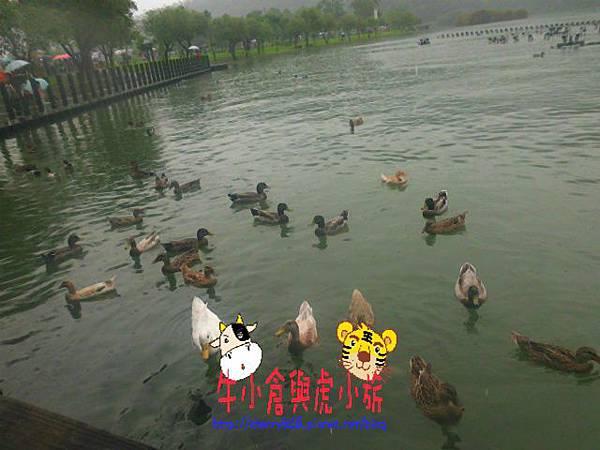 梅花湖 (18).JPG