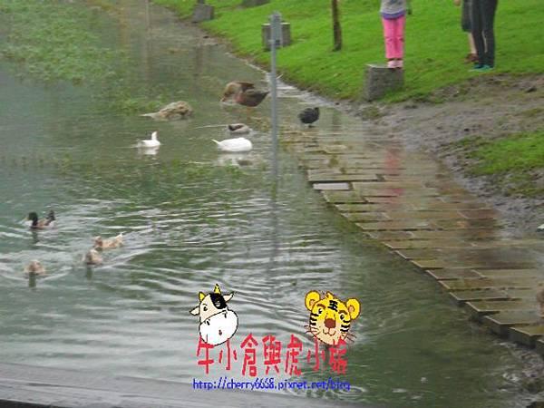 梅花湖 (26).JPG