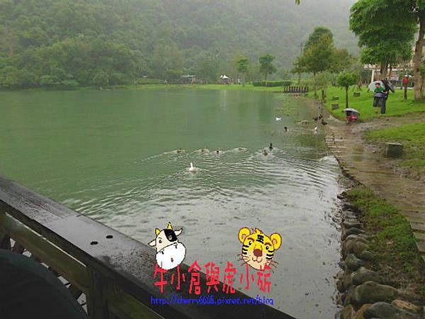 梅花湖 (27).JPG