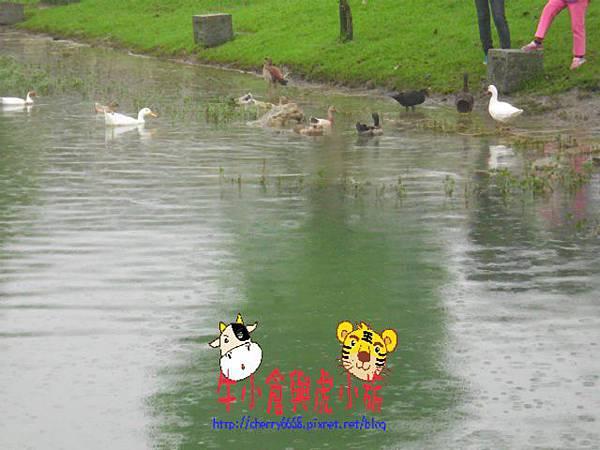 梅花湖 (28).JPG
